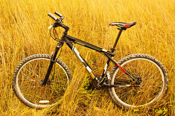 Bike among the tall grass