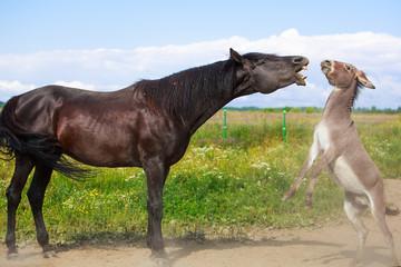 black horse and gray donkey