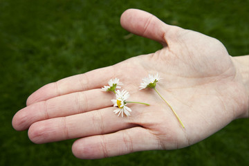 Daisies in the palm of a young womans hand