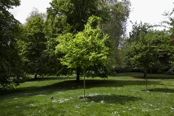Small tree in the park spot lit by sun