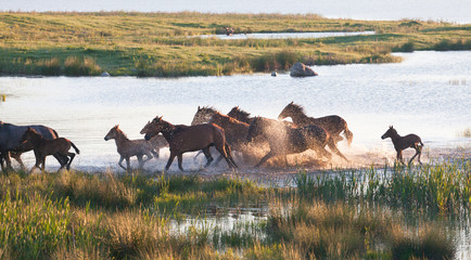 Herd of horses on a summer pasture.