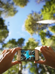 Mobile photo and trees