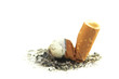 Cigarette butt with ash isolated on white background.