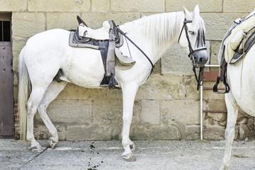 Horses with saddle