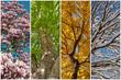Leinwanddruck Bild - Vier Jahreszeiten