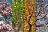 Fototapety Vier Jahreszeiten