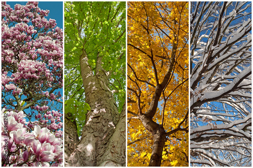 Deurstickers Magnolia Vier Jahreszeiten