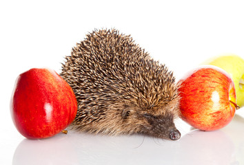 hedgehog with an apple.  hedgehog isolated.