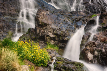Todtnauer Waterfalls with yellow flowers, Black Forest, Germany