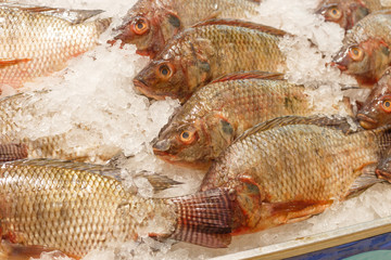 tilapia inside ice for sell