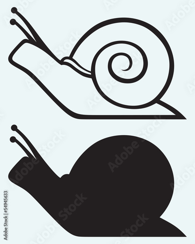 Snail isolated on blue background
