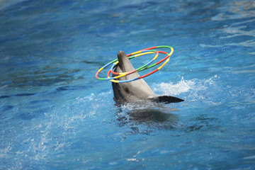 dolphin and hoop
