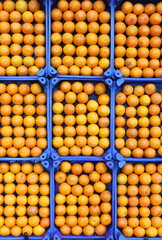 Oranges in rows for sale in a greengrocery