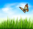 Nature background with green grass and butterfly and blue sky. V