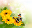 Nature background with yellow beautiful flowers and butterfly. V