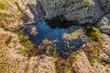 seaweed on a rock