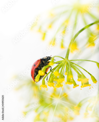 Ladybird close-up on white background