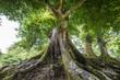 Leinwandbild Motiv big old tree