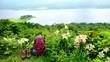 花と緑と湖の高原を歩く