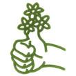 grünen Daumen bei Pflanzen haben