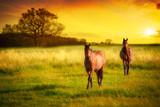 Horses At Sunset - Fine Art prints