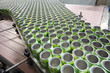 Many open green cans for drinks move on conveyor