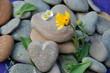 Steinherz mit Blüten