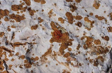 Close-up of colorful lichens are variamenti organisms