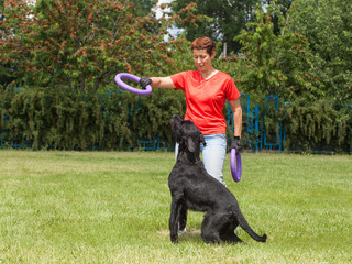 Woman teaches dog breed The Giant Schnauzer (also Riesenschnauze