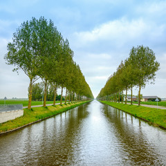 Tree rows on the canal and reflection on water. Netherlands