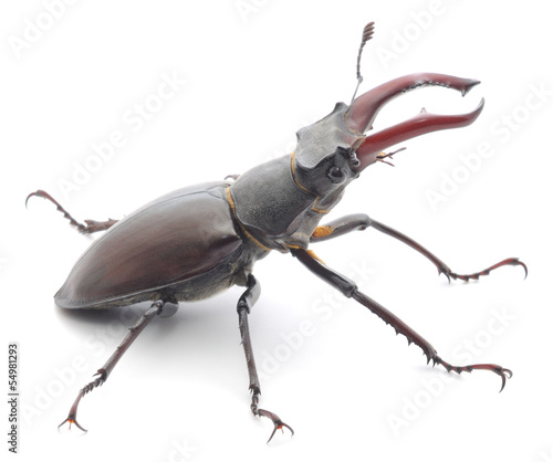 Foto op Canvas Neushoorn Rhinoceros beetle isolated on white