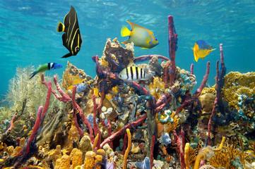 Coral reef underwater colors