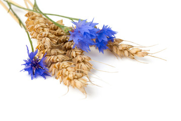 Bunch of cornflowers and wheat on a white background