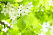 white flowers and green leaves background