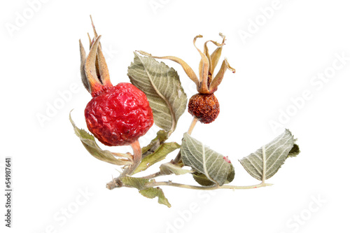 Dried rose hips isolated on white