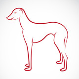 Vector image of an dog (azawakh)