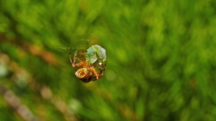 Spider and its prey.