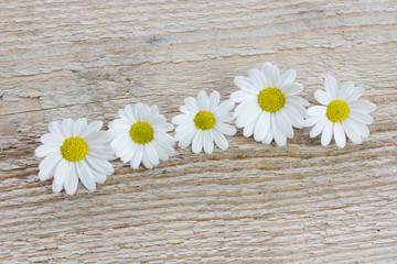 five chamomile flowers