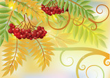 Autumn card with red rowan berry, vector illustration