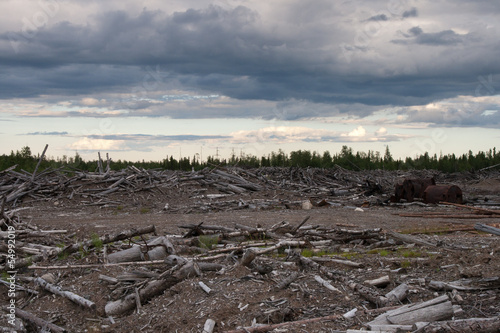 logs debris - 54992019