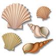 Shell set - 54992671