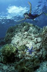 Schnorcheln, Korallen