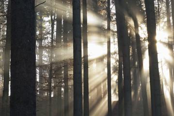 Deutschland, Berlingen, Nebel in einem Wald