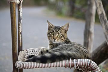 Katze liegend auf Stuhl