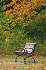Kanada, Ontario, Verlassene Parkbank, Herbstlaub