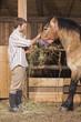 Bauer füttert Pferde