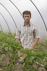 Mann im Gewächshaus kniend vor Paprikapflanzen
