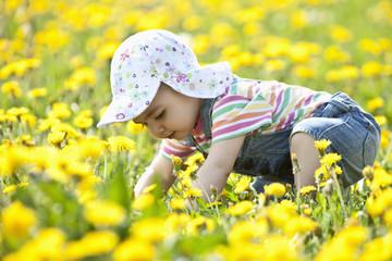 Deutschland, Bayern, Baby auf der Suche, krabbelt im Blumenfeld