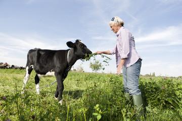 Deutschland, Sachsen, Seniorin füttert Kalb
