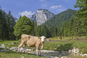 Kuh im Längental